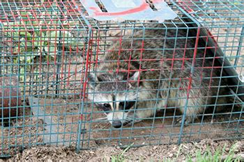 animal removal services columbus oh stryker pest control