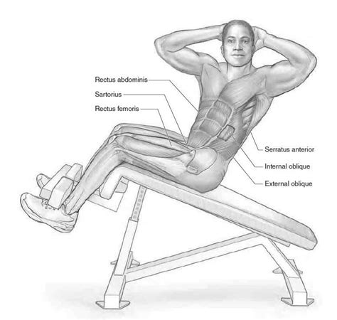 Chair Sit Ups Muscles decline sit up exercises driverlayer search engine