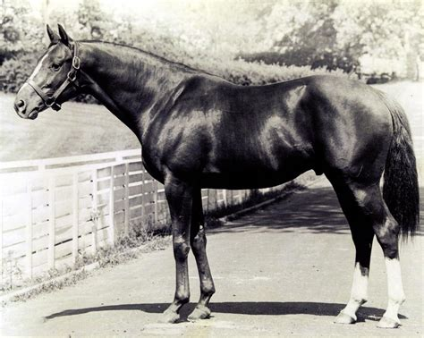 bird sea history dan famous horse racehorses most racing horses race racehorse thoroughbred darby derby albatroz bloodstock farm birds via