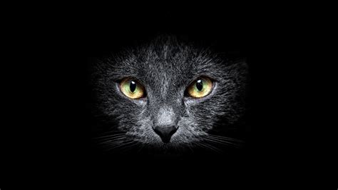 Black Cat Hd Wallpaper  Background Image  1920x1080 Id