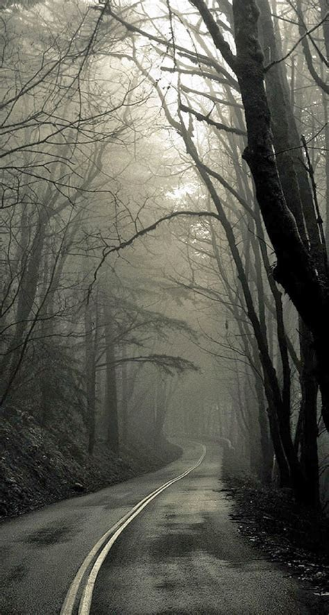 Creepy Forest Road Iphone 6 Plus Hd Wallpaper Hd Free