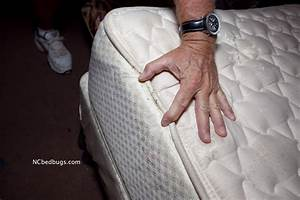 bed bugs are they in your dorm room siowfa14 science With bed bugs in college