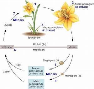 Flashcards - Plant Bio - Exam 3