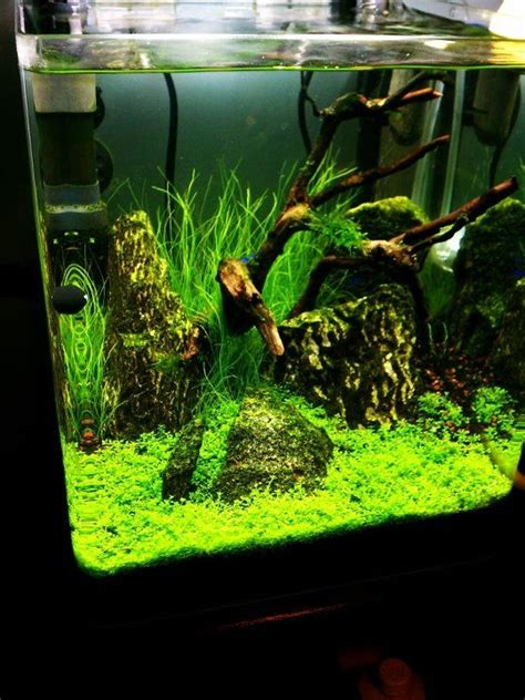 fish tank aquascape designs great grand aquascaping aquascaping aquarium design