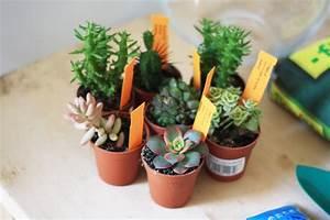 Terrarium Plante Deco : plante pour mini terrarium ~ Dode.kayakingforconservation.com Idées de Décoration