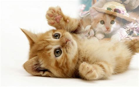 gambar  meme lucu gambar kucing lucu galau