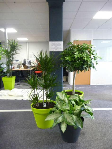 plantes pour bureau décoration bureau plantes exemples d 39 aménagements