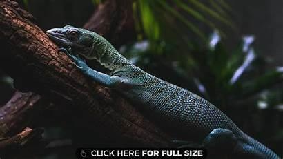 Lizard Wallpapers Free4kwallpapers