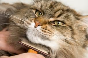 how to care for a cat general care for your cat international cat care