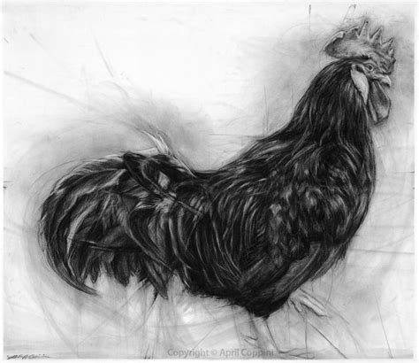 charcoal drawings  april coppinni cloth  goods