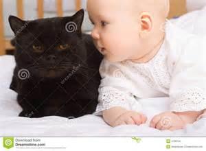 Cute Baby Black Cats