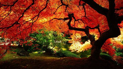 Autumn Wallpapers Hd by Autumn Hd Wallpapers Wallpaper Cave