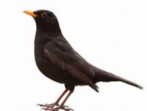 vogel von terrasse fernhalten kleinster mobiler gasgrill With garten planen mit tauben vom balkon fernhalten