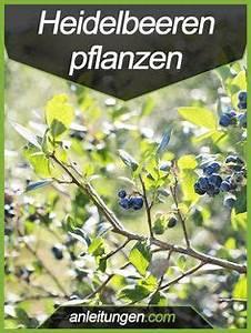 Wann Heidelbeeren Pflanzen : 16 ideen auf deinem selbstversorgerhof geld zu verdienen und der umwelt nicht zu schaden blog ~ Orissabook.com Haus und Dekorationen