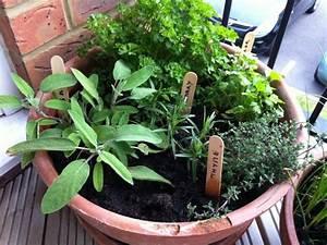 Herbes Aromatiques En Pot : jardin d 39 herbes aromatiques sur balcon plantation et soins ~ Premium-room.com Idées de Décoration