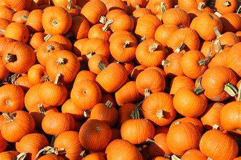 Hd Fall Pumpkin Wallpaper Android Wallpaper Fall Colors