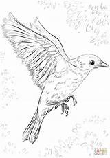 Flying Bird Coloring Drawing Draw Pages Realistic Birds Flight Printable Step Simple Supercoloring Drawings Easy Sketch Cuckoo Tutorials Getdrawings Bluebird sketch template