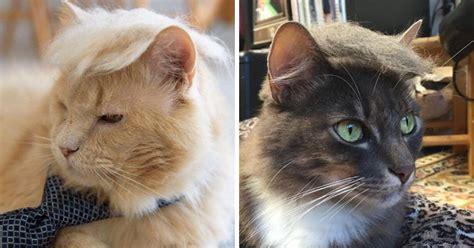 hilarious   cats   donald trump