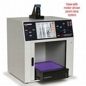 dna and uv fluorescence gels syngene ugenius3 With gel documentation system