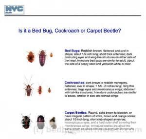 Best Way To Steam Clean Carpets by Black Carpet Beetles Vs Bed Bugs Carpet Vidalondon