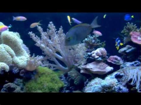 Okeanos Aquascaping by Custom Aquariums Saltwater And Freshwater Custom