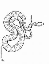 Snake Cobra Coloring Pages King Print sketch template