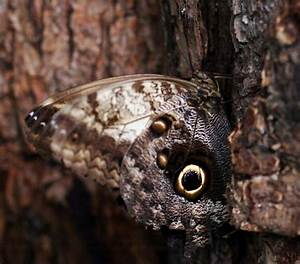 45 Breathtaking Examples Of Animal Camouflage Photography