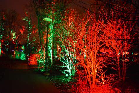 holiday tree light show at morton arboretum shawna coronado