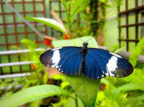 Der Garten Der Schmetterlinge Von Schloss Sayn Weltenkundler