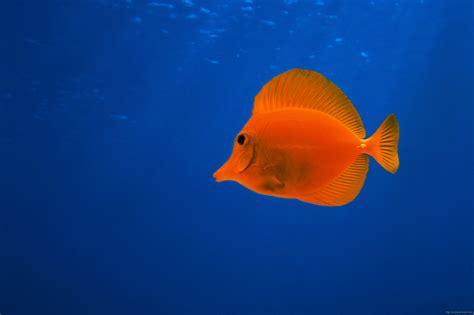 Fish Underwater World Wallpaper - windows 10 Wallpapers