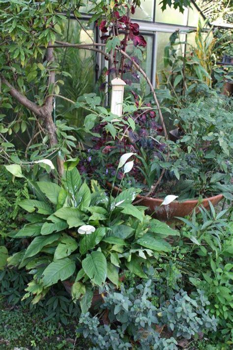 entretien des faux arums en pot au jardin forum de jardinage