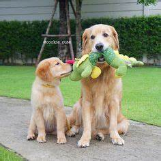 1000+ images about Dog toys for Golden retrievers on ...