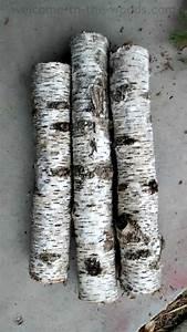 Birch, Tree, Branches
