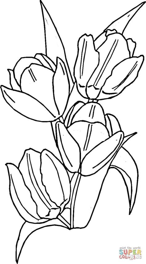 Tulips coloring page from Tulip category Select from