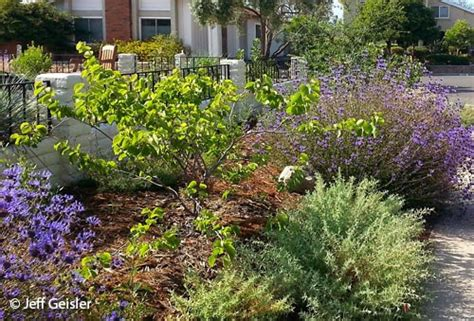 plants in san diego san diego native plants garden native tour 2016