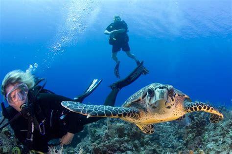 cayman islands  underwater treasures