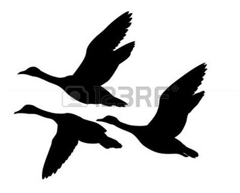 Mallard Clipart Duck Hunting