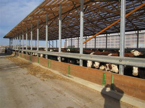 Cattle Barns Designs by Zekaria Plans For Beef Cattle Barn