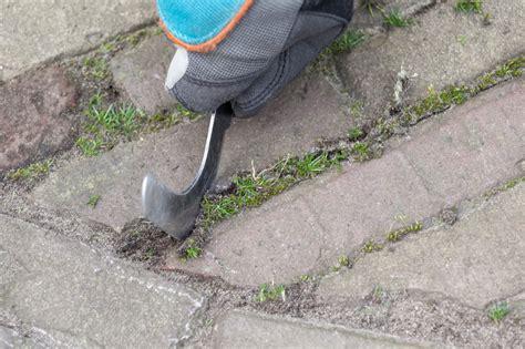 fugen reinigen backpulver terrassenfugen reinigen 187 methoden hilfsmittel