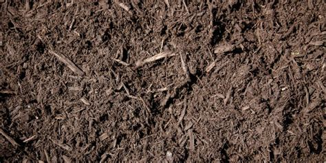 is mulch toxic walnut mulch montgomery landscaping inc