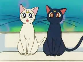 anime cat cat