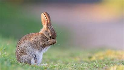 Bunny Animal Rabbit Background Wallpapers Pc Wall