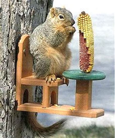 squirrel feeder chair plans squirrel feeders keep em happy away from bird