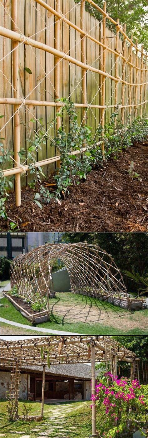 growing climbers for fences climbing vines on fence www imgkid com the image kid has it