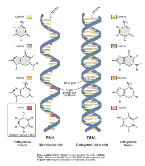 Protein P53 Plays Three Cancerfighting Roles Gate2biotechcom