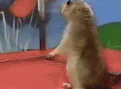 Dramatic Chipmunk GIF - Chipmunk Dramatic - Discover ...