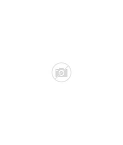 Development Professional Pigs Three Seminar Cartoon Cartoons