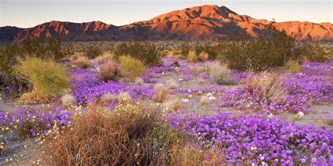 wildflowers   west