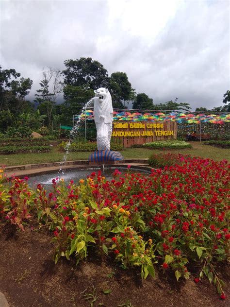 taman bunga celosia lokasi  instagramable  cocok