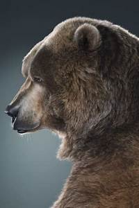 Grizzly Bear / Coolspotters